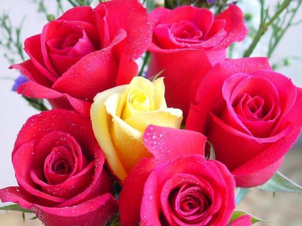 20flowers.jpg