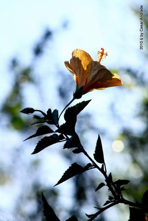 Flower_15.jpg