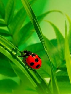 Insects03.Jpg