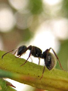 Insects04.Jpg