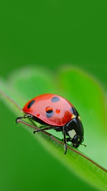 Insects06.Jpg