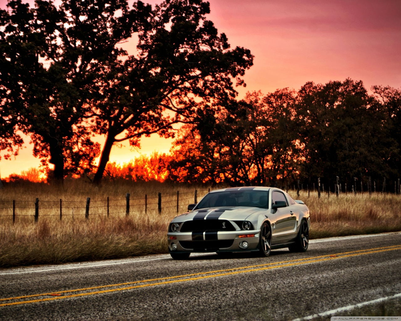 Ford_shelby_hdr_wallpaper.jpg
